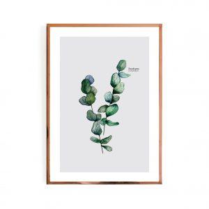 Eucalyptus Pair