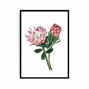 Protea set 1