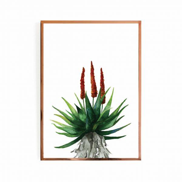 Aloe closeup
