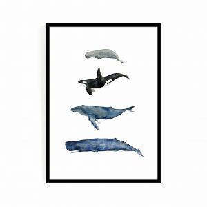 Whale series