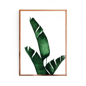 My leafy banana